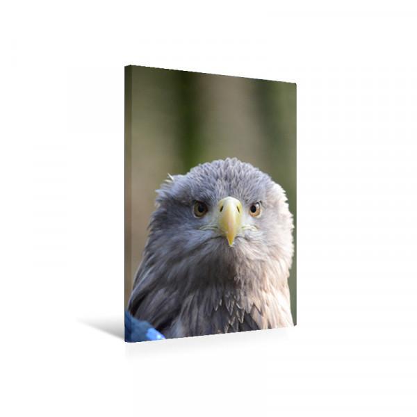 """Leinwandbild """"Adler"""""""