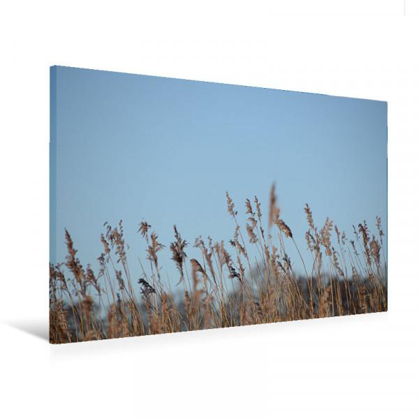 "Leinwandbild ""Gräser im Wind"""